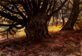 ancient_yew_kingley_vale