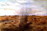 dungeness_desert