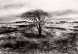 dungeness_lone_tree