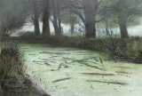 foggy_bushy_algae
